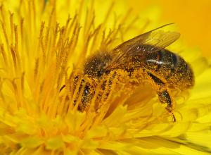 abeiller.jpg