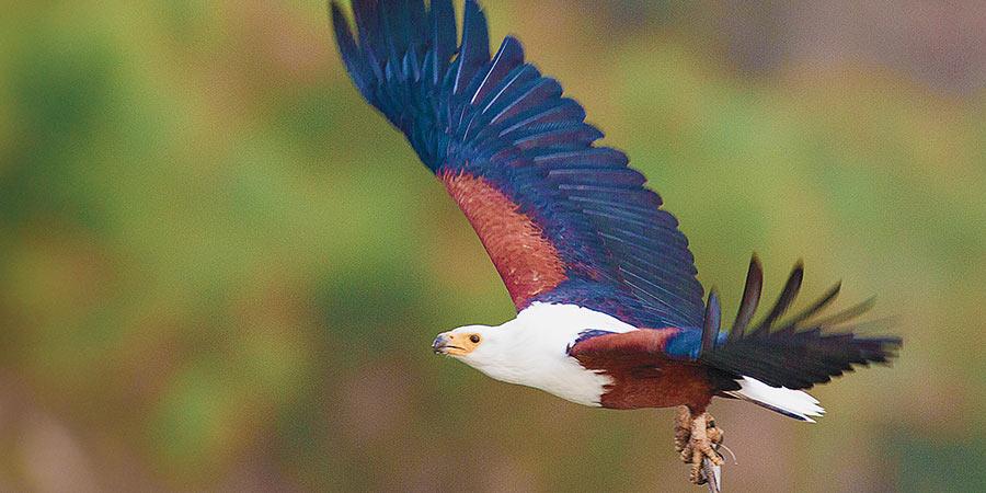 aigle (1).jpg