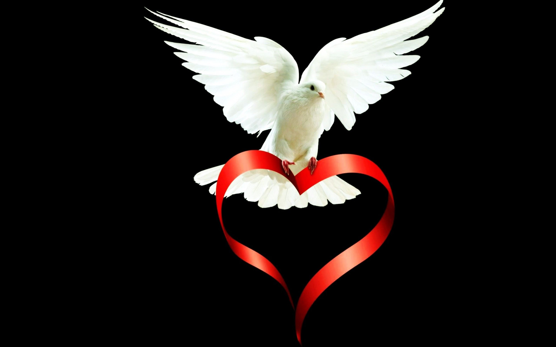 Belle colombe.jpg