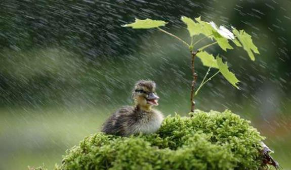 belle pluie 1.jpg