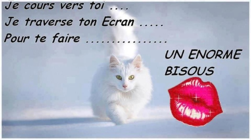 bisous chat 2.jpg