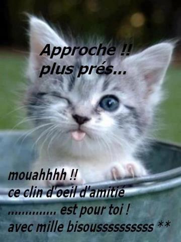 Bisous Chat mimi.jpg