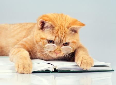 Chat et livre + lunette.jpg