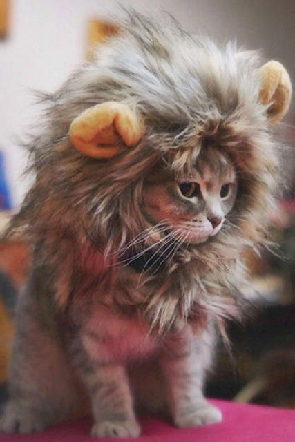 Chat lion 2.jpg