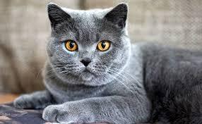 chat treux .jpg