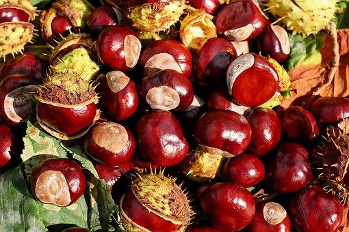 chestnut-1710430__340.jpg