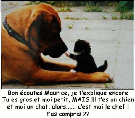 chien-et-chat mini.jpg