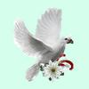colombe-blanche-en-vol-gif-8.png