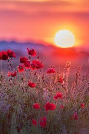fleur au soleil.jpg