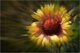 fleur d bois.jpg
