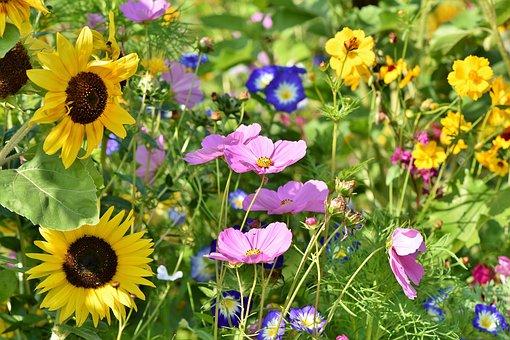 flower-meadow-3598555__340.jpg