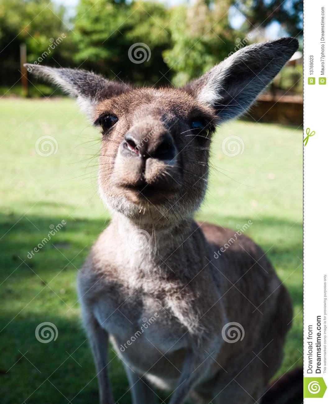 funny-kangaroo-13769023[1].jpg