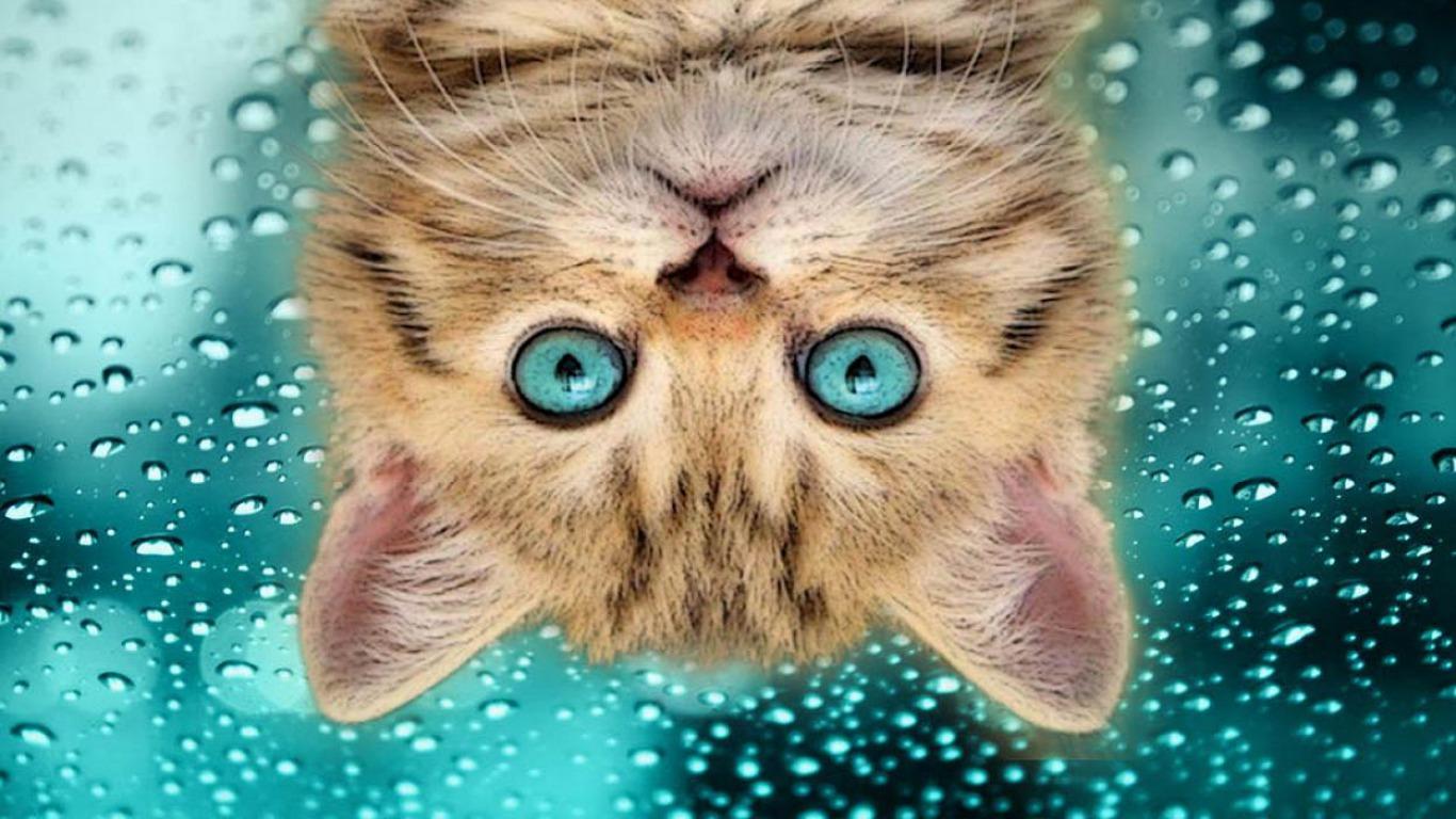 funny_cat_upside-down-HD-humor-wallpaper[1].jpg