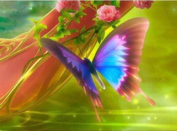 Joli papillon.jpe
