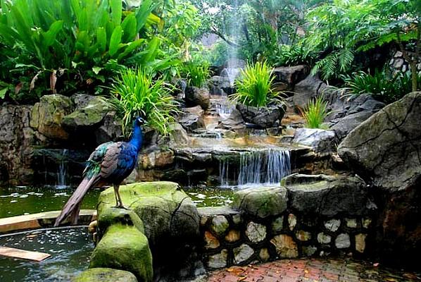 Kuala Lumpur Bird Park 1.jpg