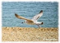 L'oiseau - 1.jpg