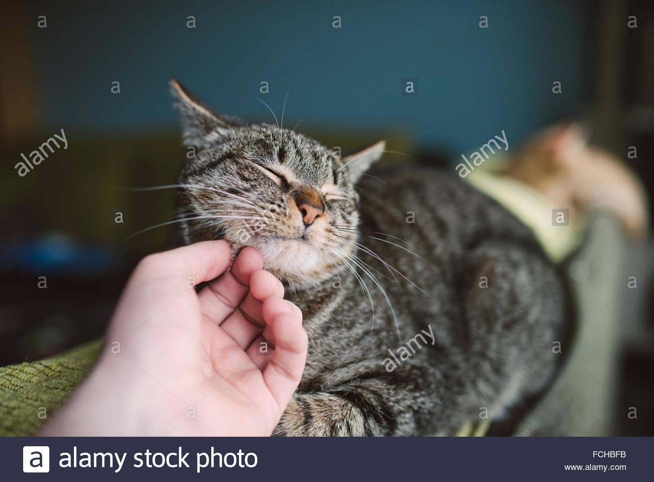 main-de-lhomme-caresser-chat-tigre-fchbfb.jpg