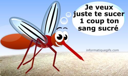 moustique-qui-pique.jpg