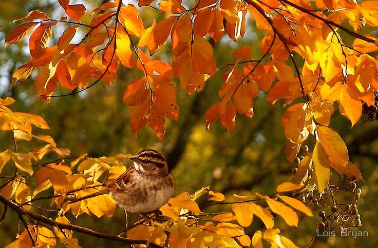 oiseau-pose-dans-les-branches-feuilles-d-automne-majmajest.com_.jpeg