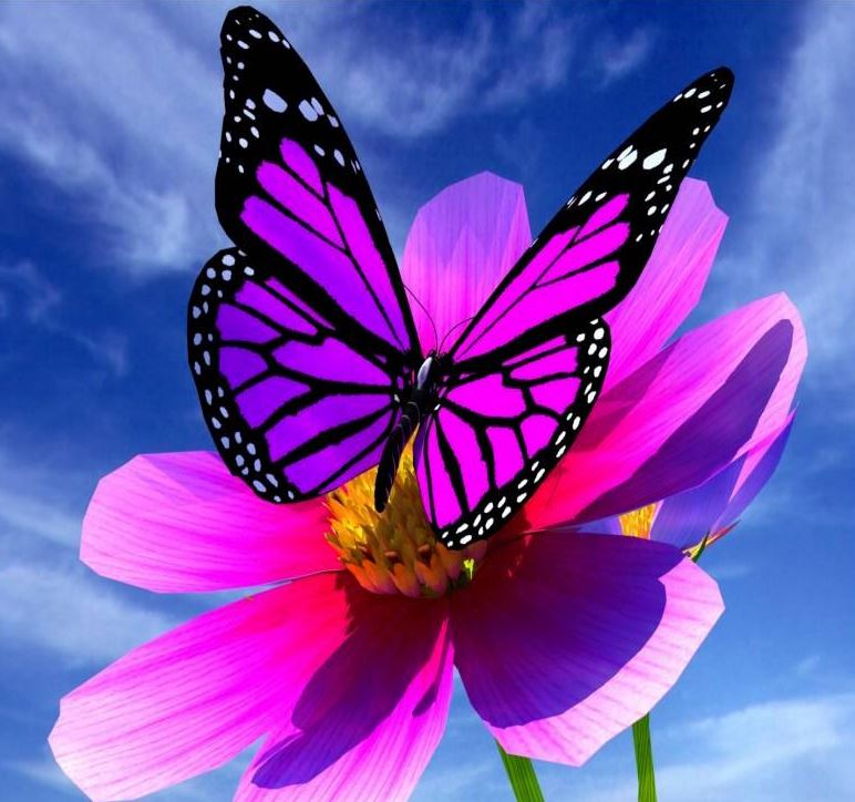 Papillon 2.JPG