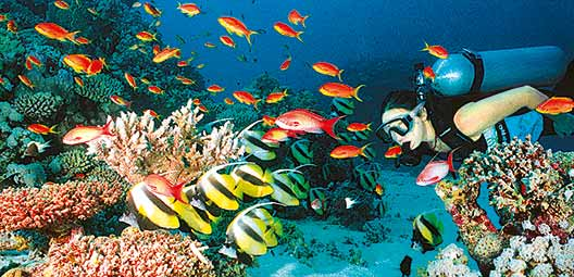 philippines-plongee-dans-larchipel-des-visayas-PAACEBP11-00005280.jpg