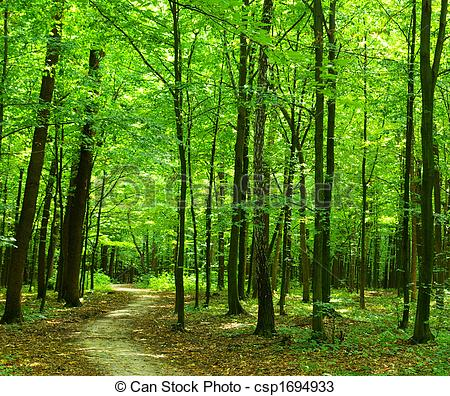 sentier-forêt-photos-sous-licence_csp1694933.jpg