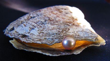 une-perle-dans-une-huitre_66997_w460.jpg
