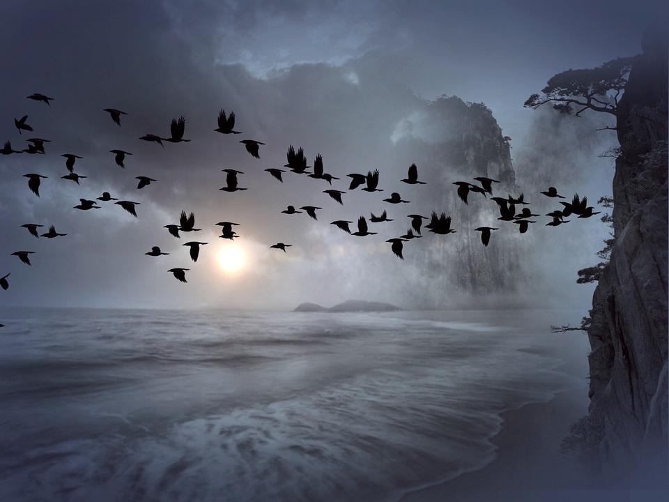 vos d'oiseaux.jpg